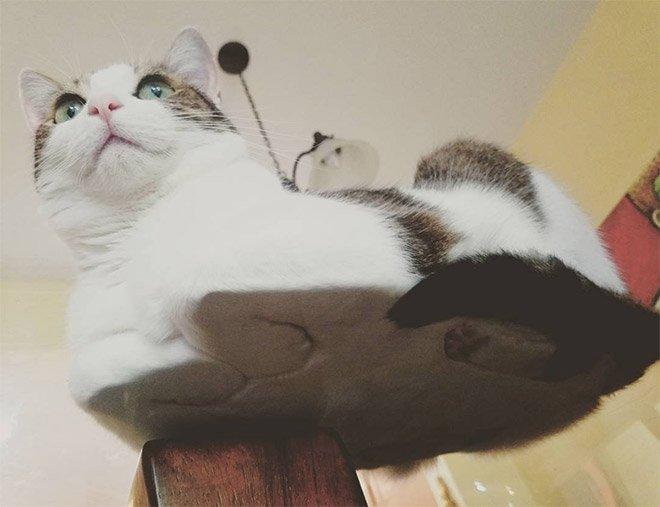 котики на стекле, вид снизу
