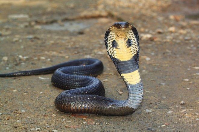 змеи сонник исламский сонник