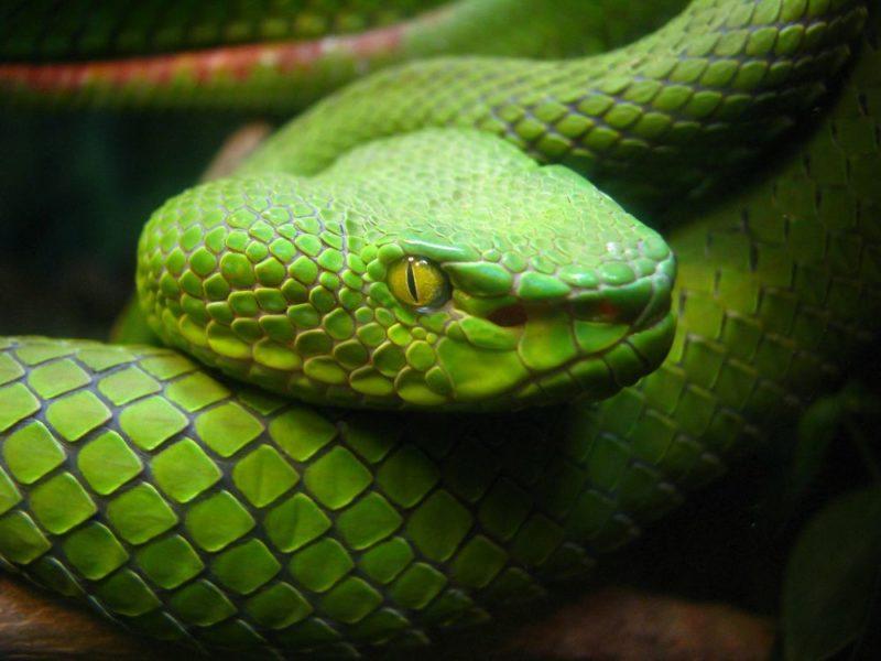 змея во сне исламский сонник