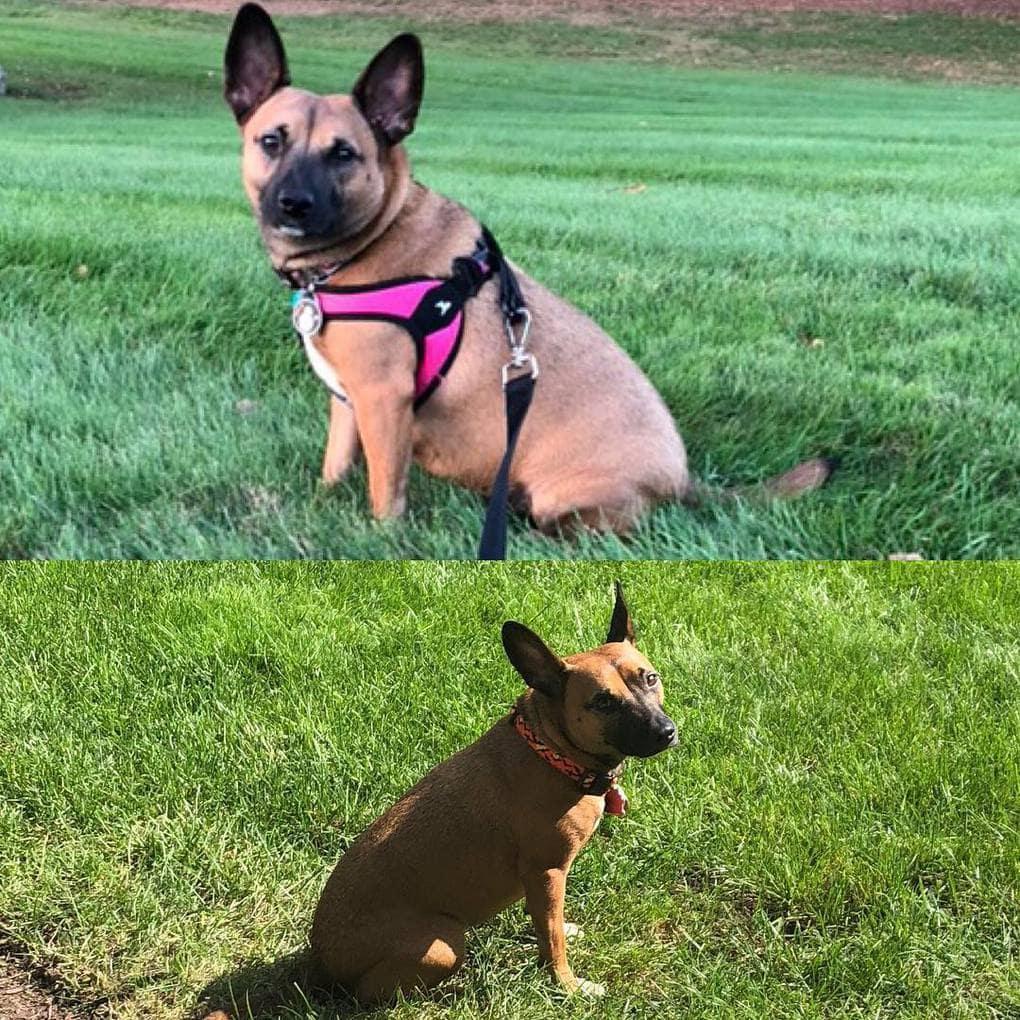Собака похудела за месяц