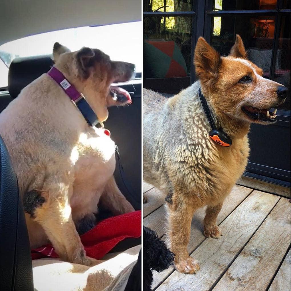 Чтобы собака похудела