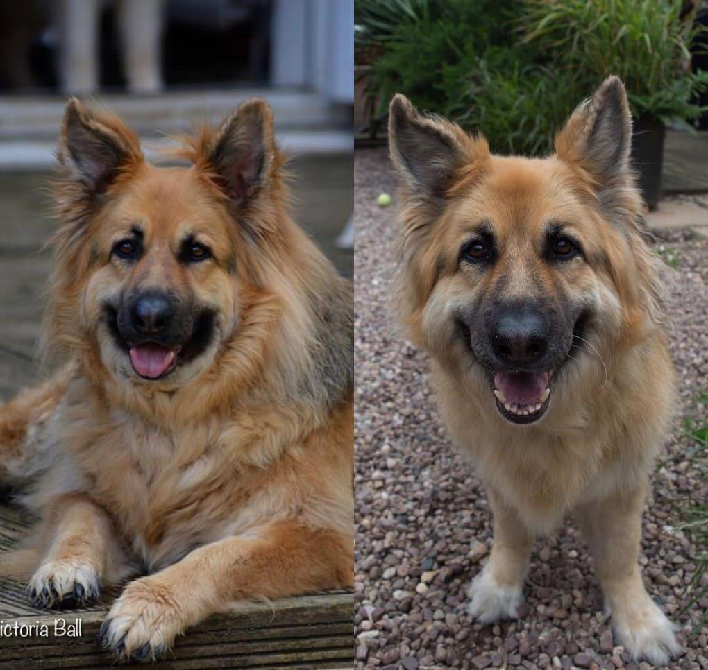 Собака сильно похудела за месяц