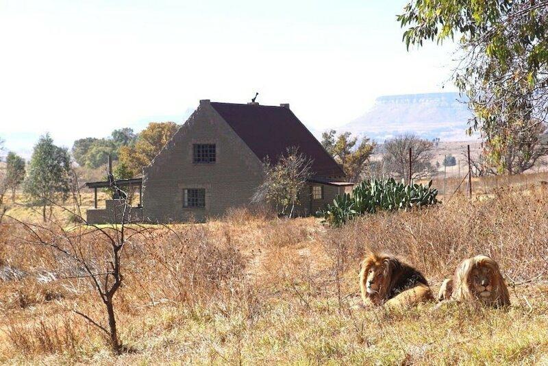 Апартаменты не для слабонервных: сдается коттедж по соседству со львами путешествия, Путешествие и отдых