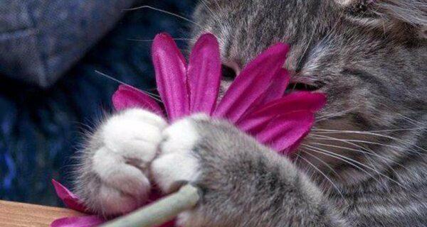 20 кошачьих растений, которые требуют ласки иеды