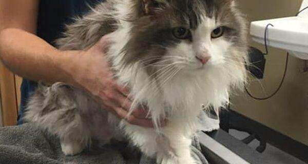 Вдохнули жизнь: замерзшего котика, найденного в сугробе, воскресили ветеринары