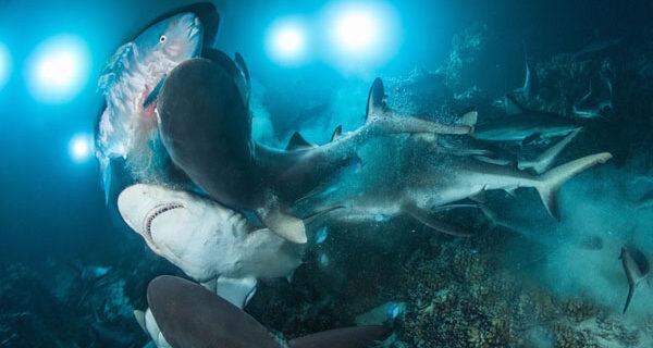 Во владениях Нептуна: подводное царство на фотографиях конкурса 2019 Underwater Photographer of theYear