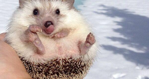 25 умилительных животных, которых «хлебом не корми», только дай показать свой язычок