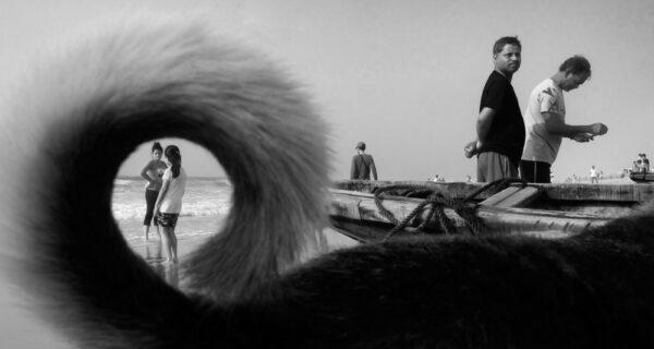 Честные и пронзительные: кадры индийского фотографа, запечатлевшие животных