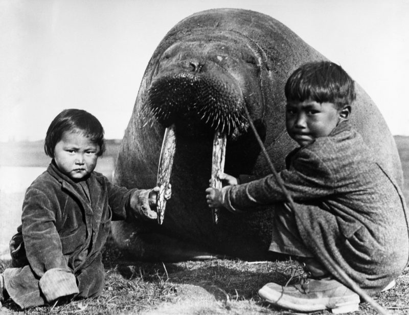 Зачем эскимосы делают сосвоими женами «ареодярекпут»?
