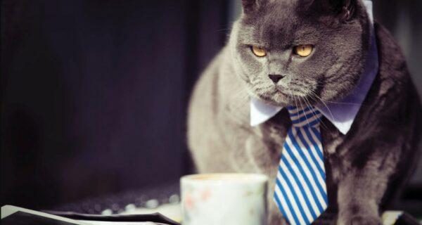 Бизнесмены, берегитесь! Ученые нашли связь между предпринимательскими способностями и токсоплазмозом