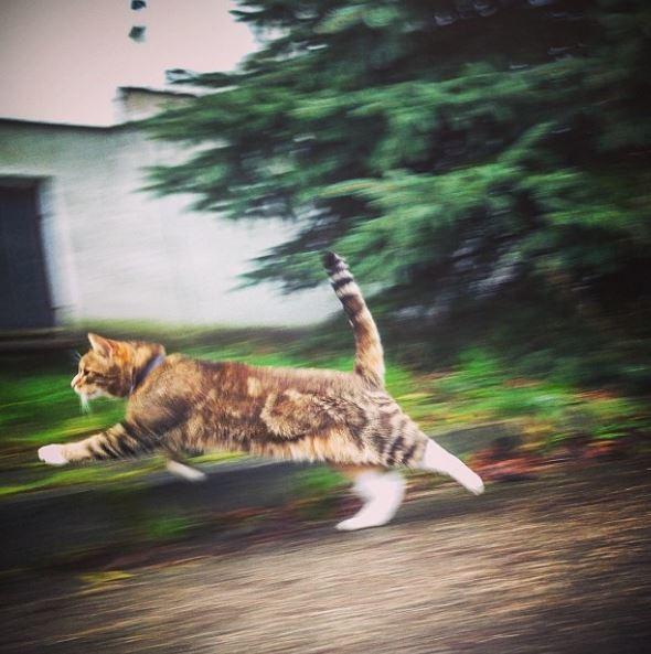 Топ-10 самых курьезных фото домашних любимцев-котов (ФОТО)