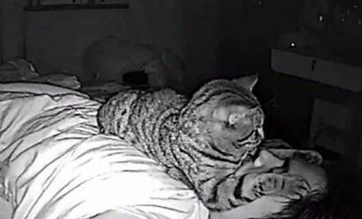 Парень установил в своей комнате камеру, чтобы заснять, что ночью делает егокошка