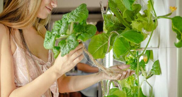 Мобильная IT-грядка: в инновационном комнатном саду может расти до 30 растений одновременно