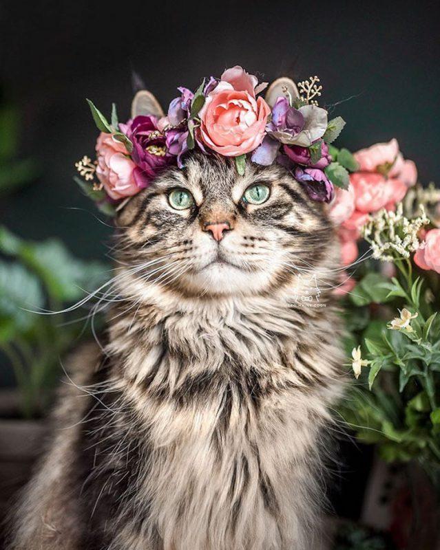 Милота в квадрате: 25 домашних любимцев в цветочных венках от талантливого дизайнера