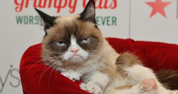 Умерла любимица миллионов — кошка Грампи