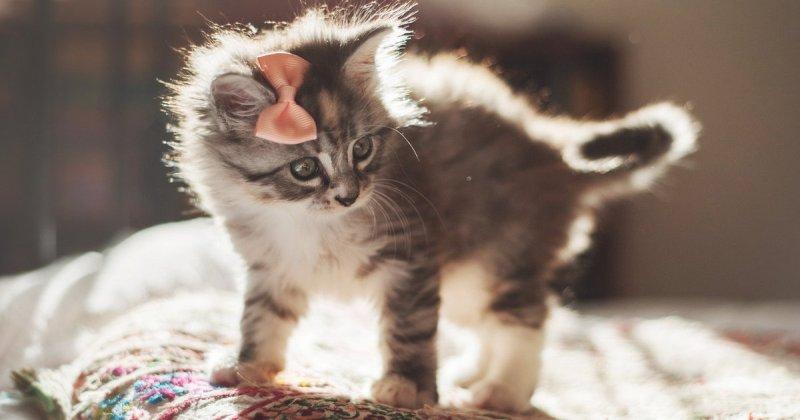 Американка спасла животное, которое приняла за кота. Как же она ошиблась фото
