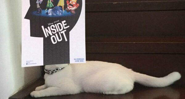 «Замурчательное кино!»: постеры к фильмам становятся лучше, если к ним добавить котов