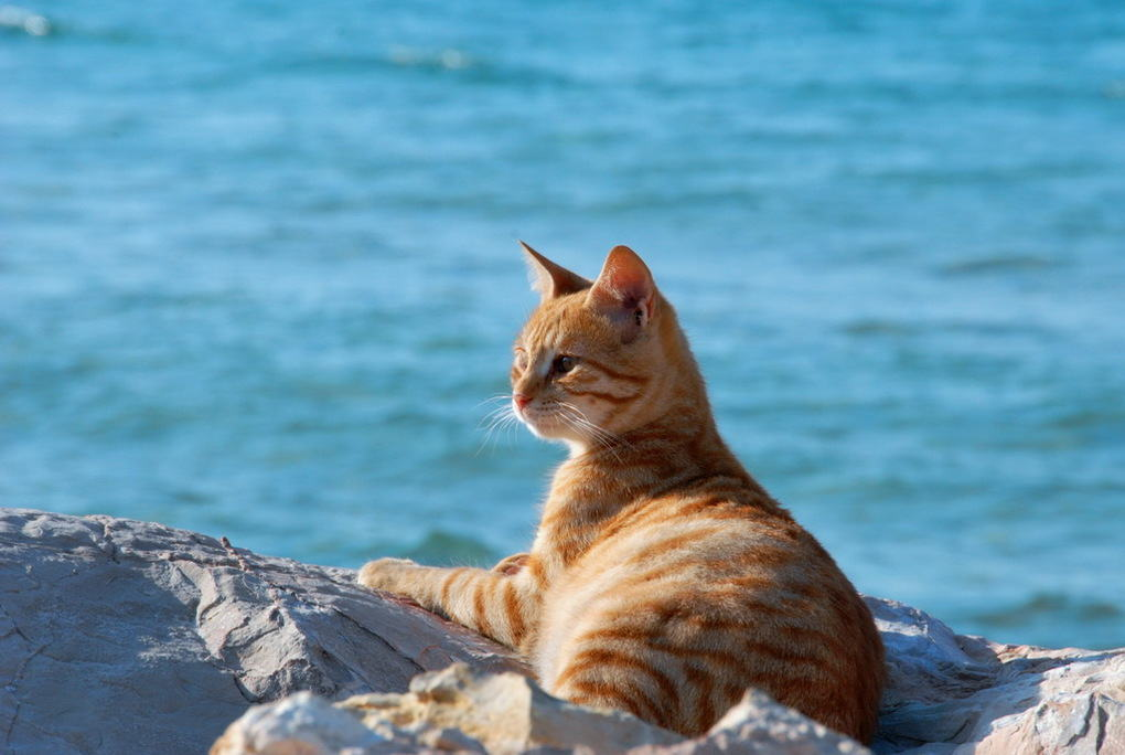 бесконечное уважение отдыхающий котик фото новостроек