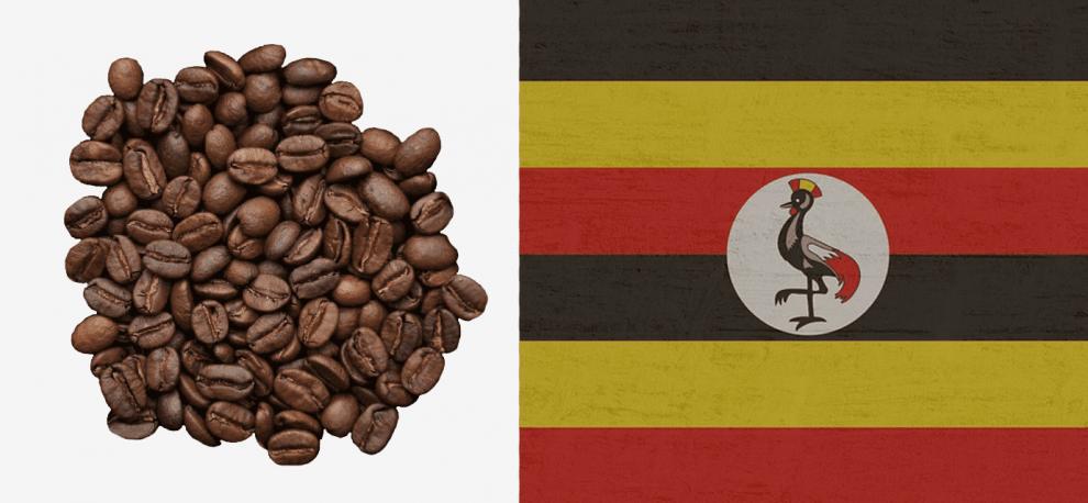 уганда кофе