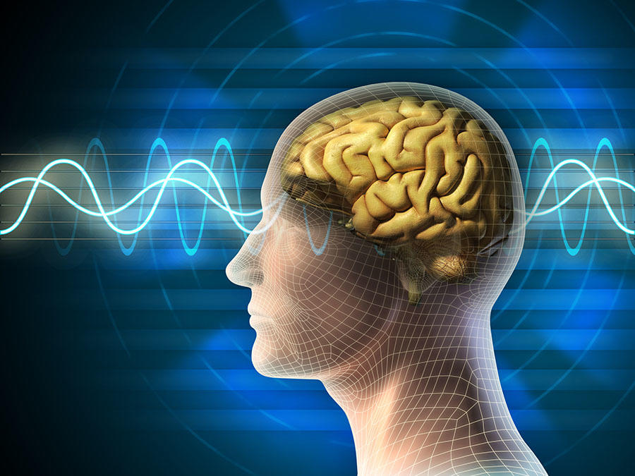 аяваска увеличивает толщину лобных долей мозга