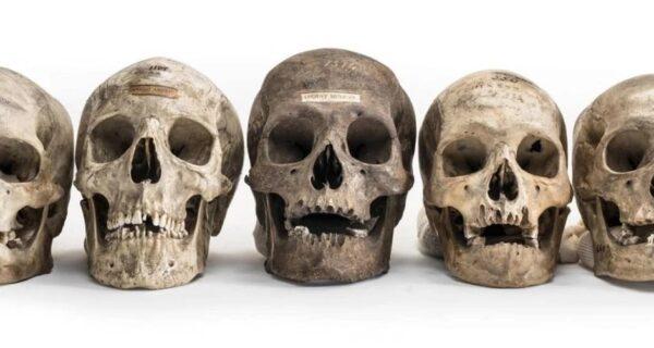 Сосчитаем косточки? На черном рынке Инстаграма появились человеческие останки