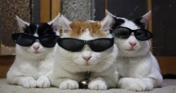 Проект «Acoustic Kitty», или Как в ЦРУ тренировали кота, чтобы за СССР следить