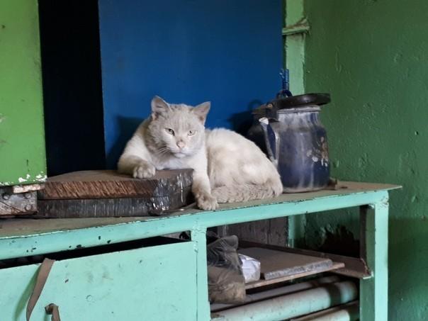 Работящие коты-заводчане: они никогда не скажут, что у нихлапки