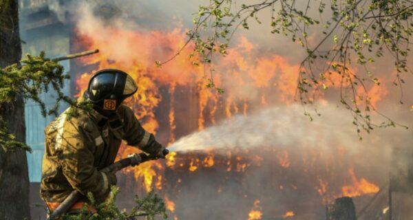 Почему горят леса? Эксперты назвали причину ухудшения пожарной ситуации на планете