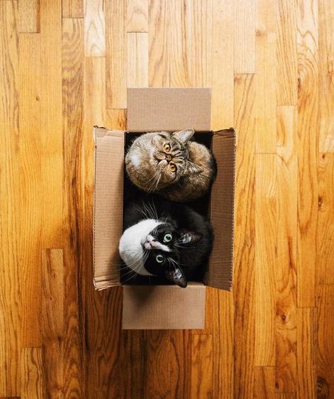 Принцесса Чито: творческая жизнь самой обыкновенной кошки Культура и искусство