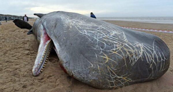 Почему взрываются киты? Как из-за морских гигантов происходят катастрофы местного масштаба