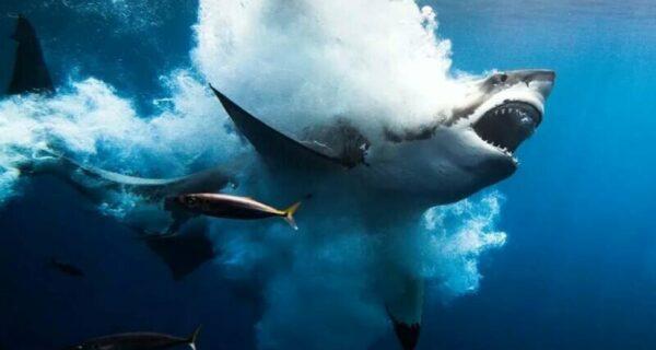 12 лучших подводных фотографии с конкурса «Through YourLens»