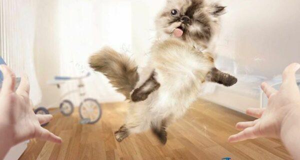 Мяу! 15 примеров забавной и милой кошачьей рекламы
