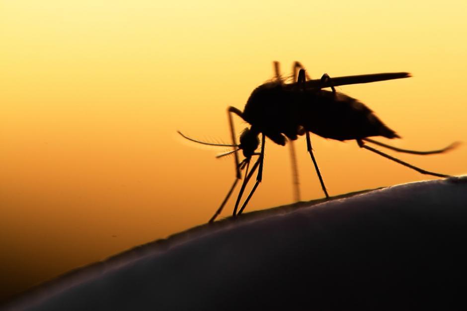 Ученые рассказали, какая группа крови «самая вкусная» для комаров