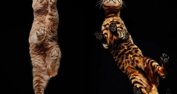 Взгляд снизу: чудесные фотографии кошек с необычного ракурса