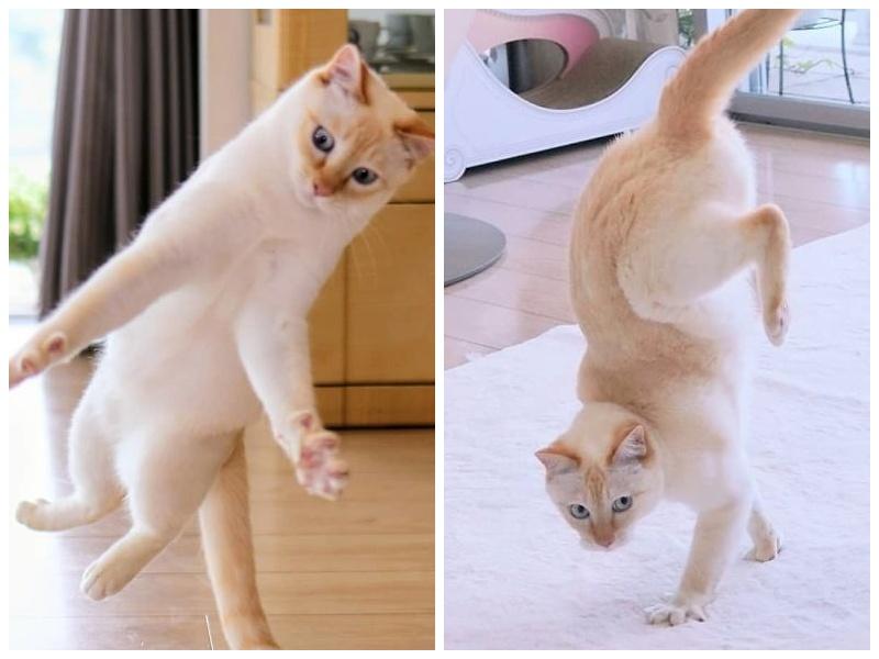 Этот кот из Японии танцует намного круче, чем вы, и вот 25 доказательств фото
