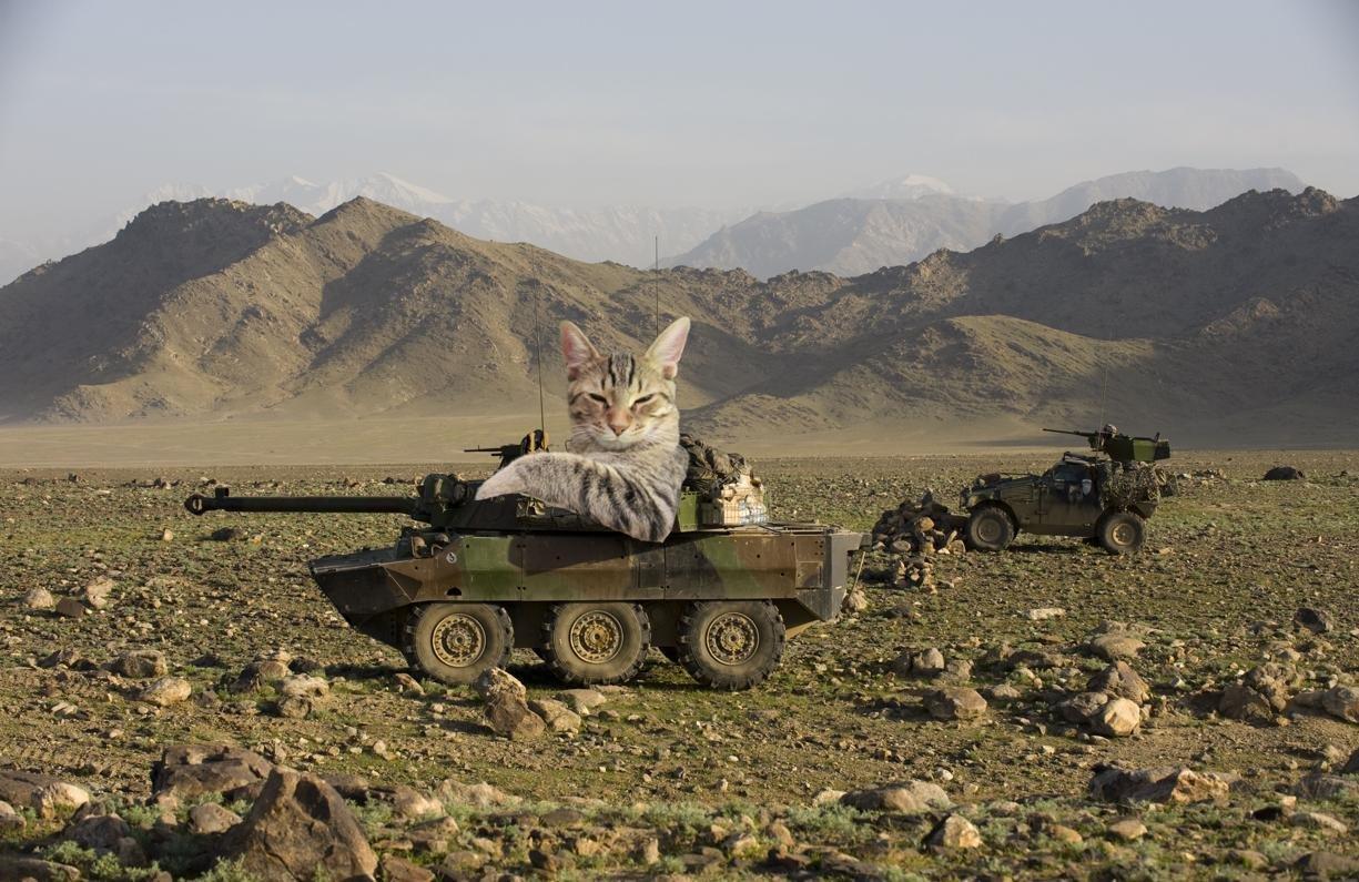 Если бы котики решили завоевать мир