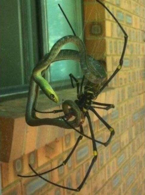 20 творений природы, способных вызвать ужас даже у человека с крепкой психикой