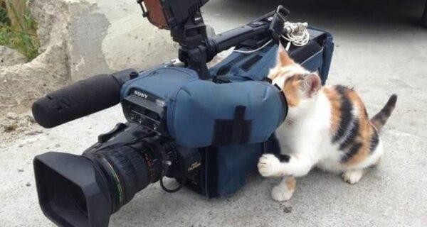 20 забавных котов-работяг, которые с нетерпением ждали выходных