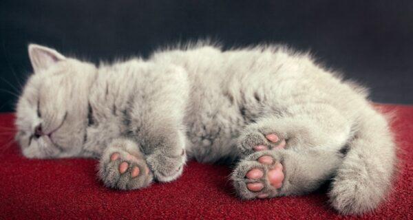 А что там на кошачьей лапке? В сети проходит самый милый флешмоб года