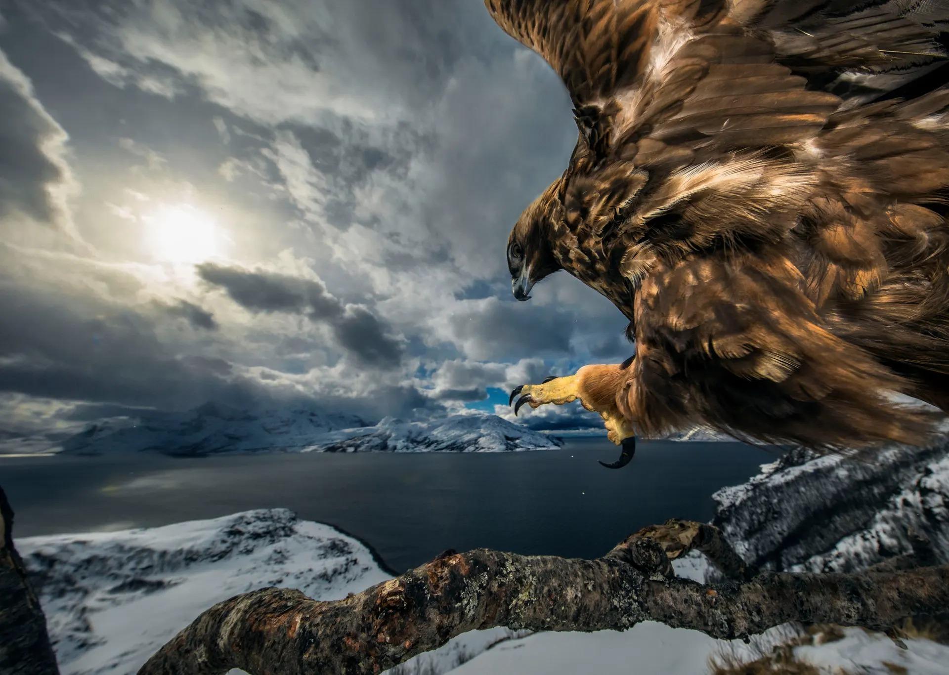 дикой природы фото
