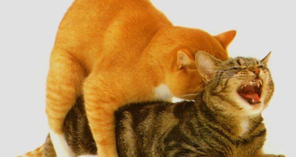 Про это: 8 фактов о кошачьем сексе