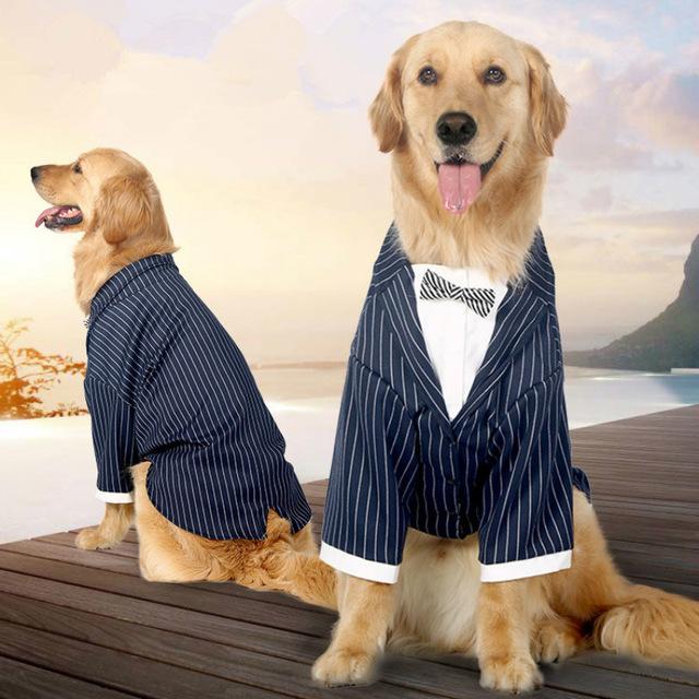 Забавные костюмы для кошек и собак. Фото