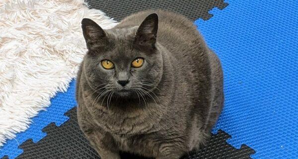 Толстая кошка по кличке Шлакоблок — новая звезда соцсетей. Многие узнали в нейсебя