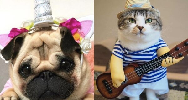 15 забавных костюмов для домашних любимцев с AliExpress