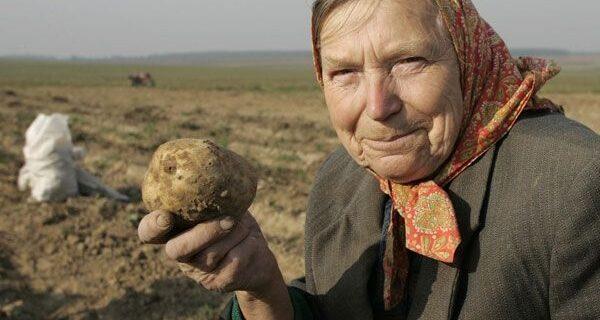 «Яблоко сатаны»: почему русские крестьяне отказывались сажать картошку