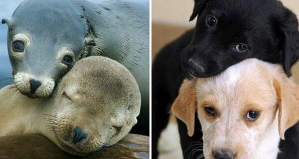 25 милых фото, которые убедят вас, что собаки и тюлени — родственники