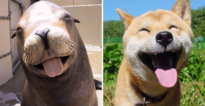 собаки и тюлени