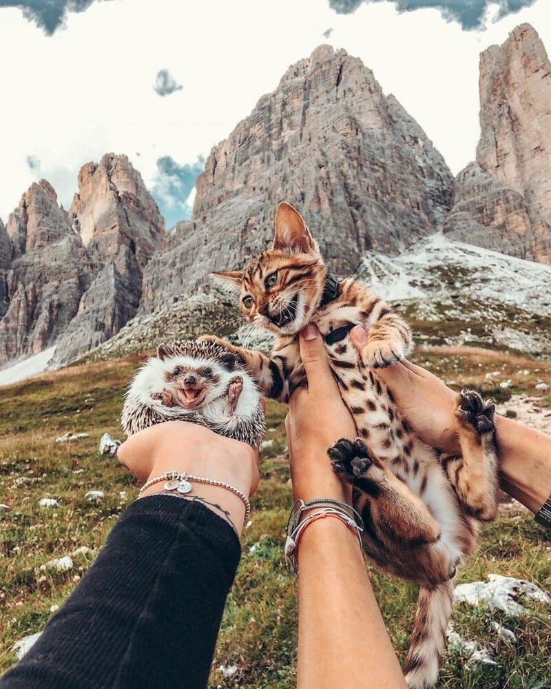 25 снимков очаровательного ежа, который путешествует по миру и завоевывает людские сердечки