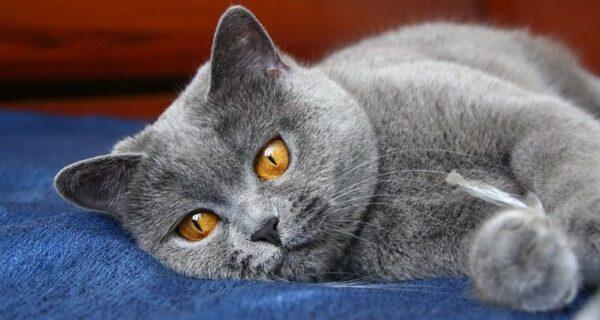 Отдохнул в отеле: коту потребовалась медицинская помощь после бурной ночи с пятью кошками