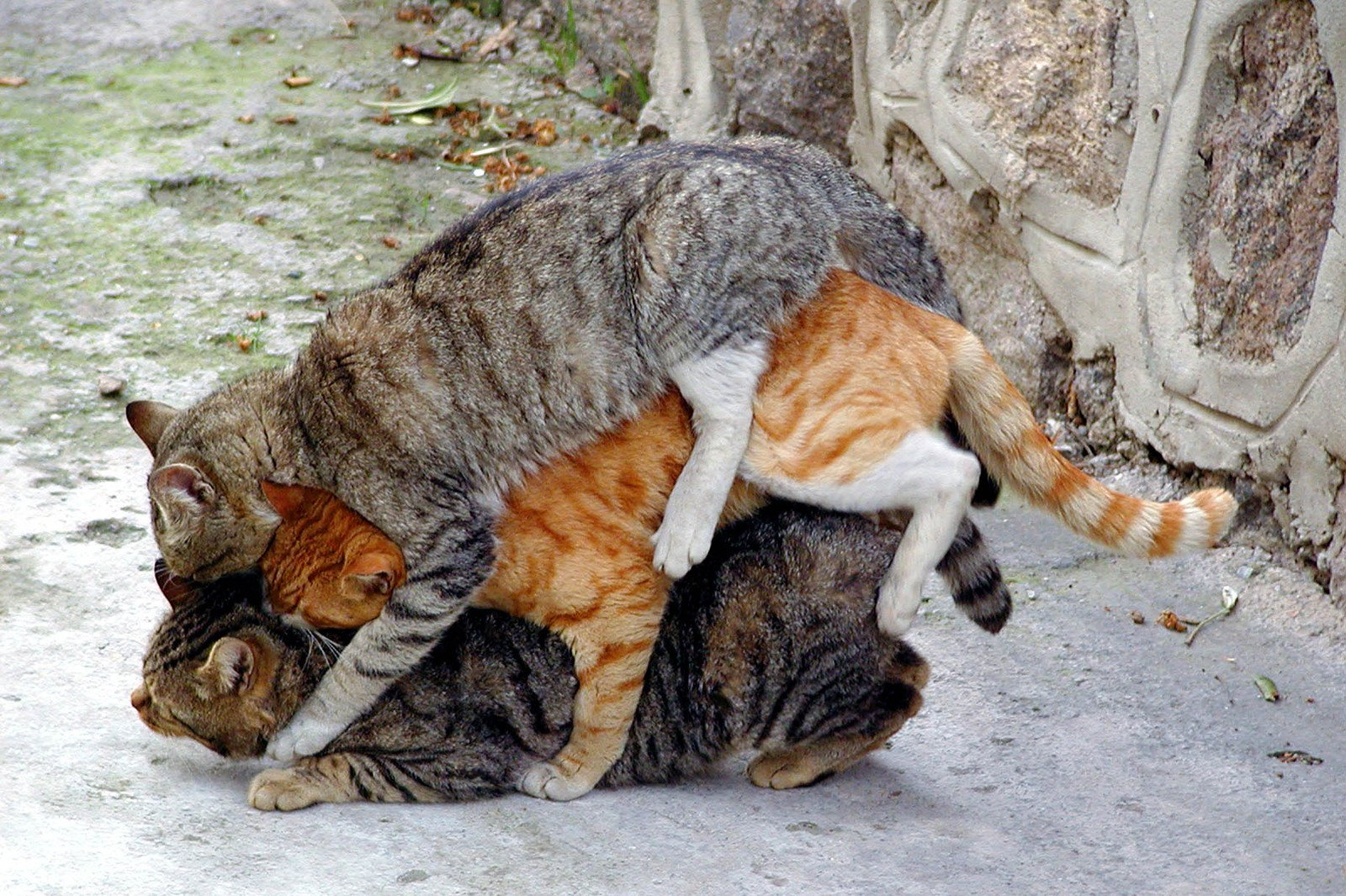 17 мерзких и немного пугающих фактов о размножении животных фото
